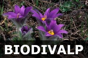Biodivalp