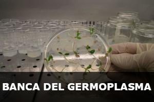 Banca del Germoplasma